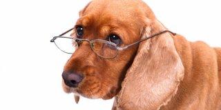 Koliko psi žive? – savjeti za dostojanstveno starenje