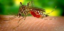 ugriz komarca -malarija