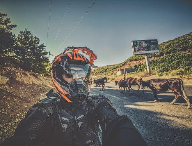 krave na cesti