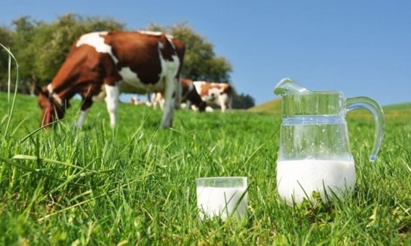 zaštita-biljaka-mlijekom