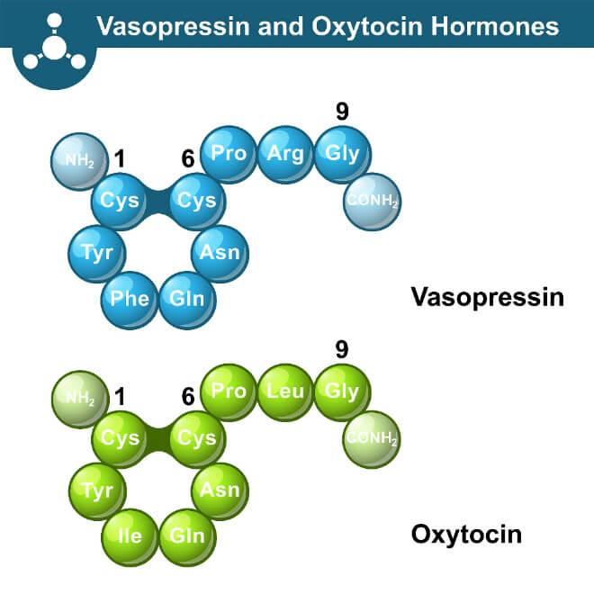 Oksitocin i vazopresin