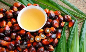 palmino-ulje