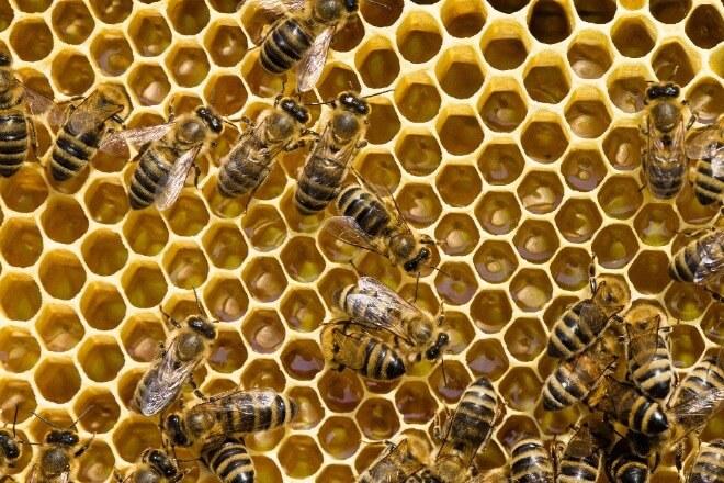 Pčelinje-saće