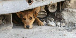 Kako prijaviti buku, otpad ili zanemarivanje pasa? – Možeš i ti!