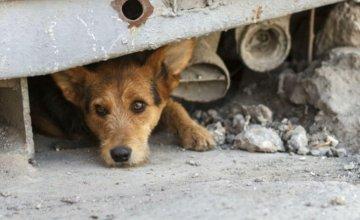 zlostavljanje-pasa