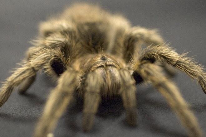 Strah-od-pauka