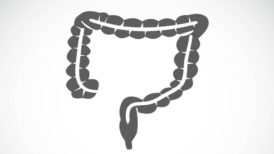 debelo crijevo
