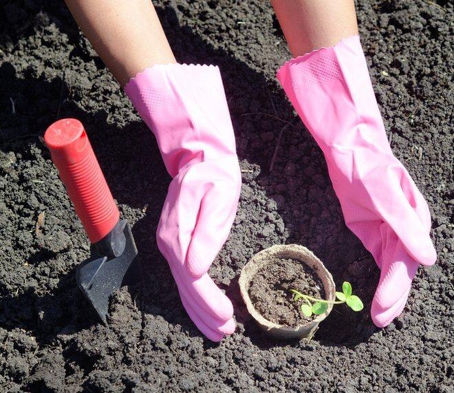 Germa za zalijevanje povrća