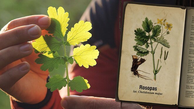 List rosopasa