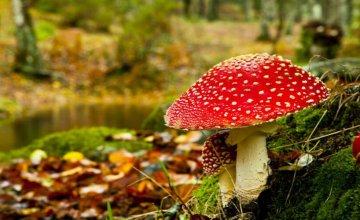Otrovne gljive