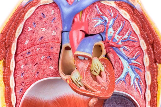 srce i pluća