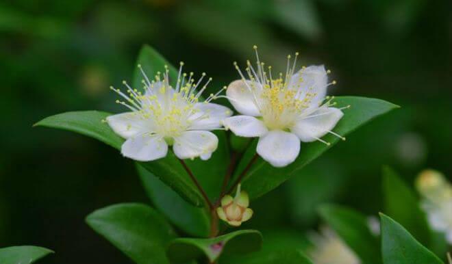 Cvjetovi