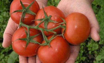 sprej od sode bikarbone za paradajz