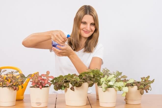sprejanje bilja
