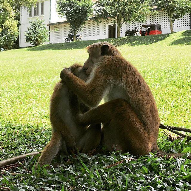 Majmuni u parku