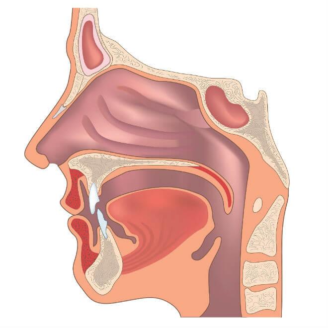 anatomija nosne šupljine