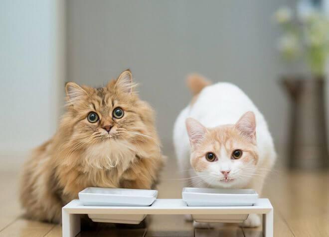 Hrana za sterilizirane mačke
