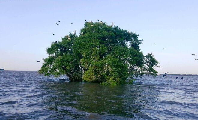 Negombo laguna