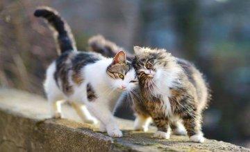 Sterilizacija mačke