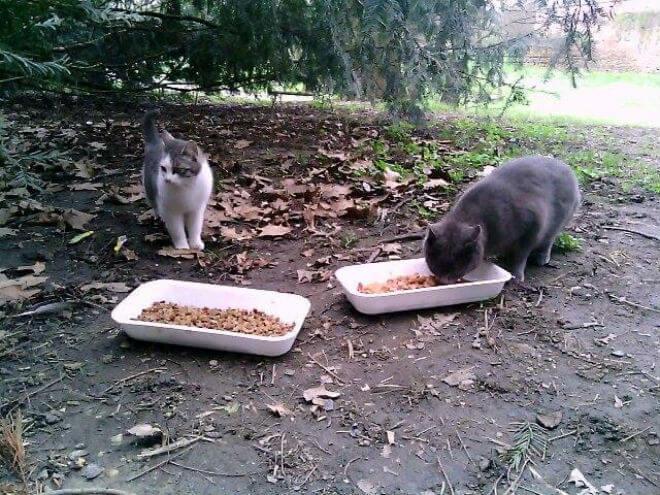 Ulične mačke