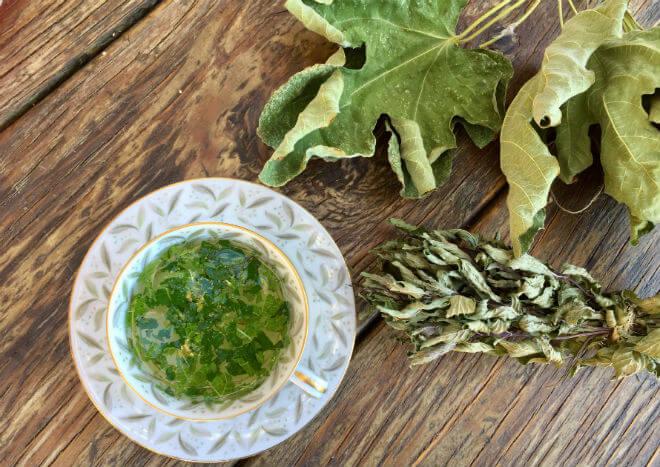 čaj od lista smokve