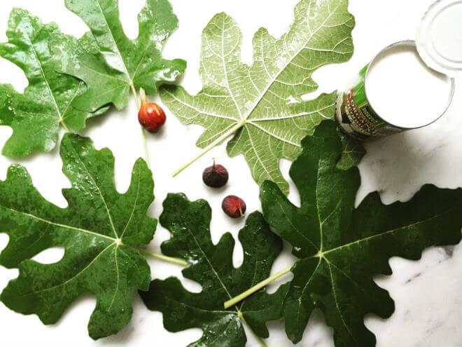 listovi smokve
