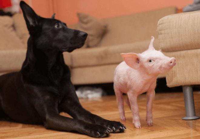 Super Ljilja i pas Ena