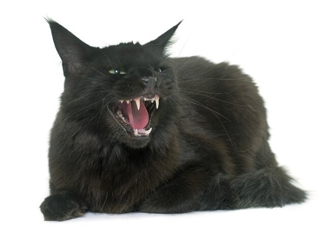 ugriz mačke signali