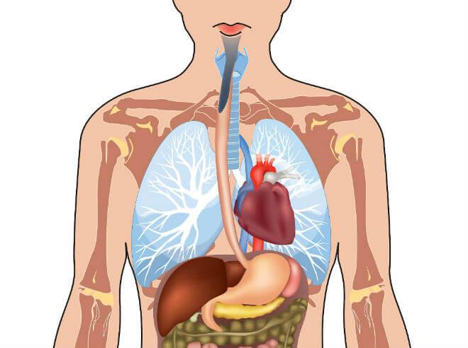 anatomija jednjaka