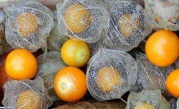 peruanska-jagoda