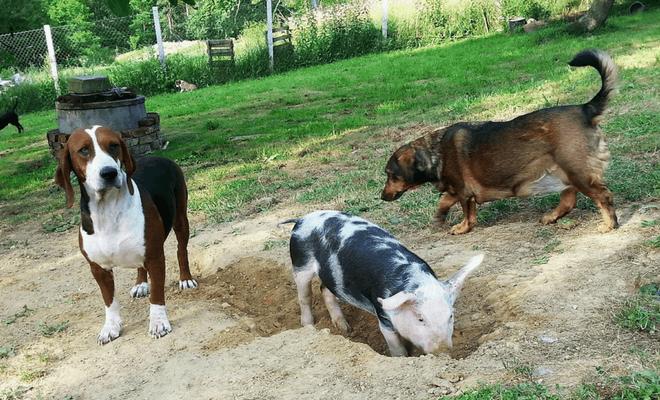 Super Ljilja kolumna 3 Sausage i prijatelji