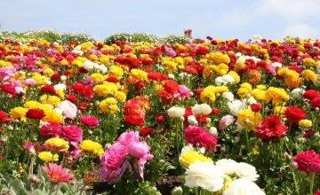 cvijeće koje cvijeta cijelo ljeto