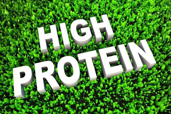 Proteini u prehrani