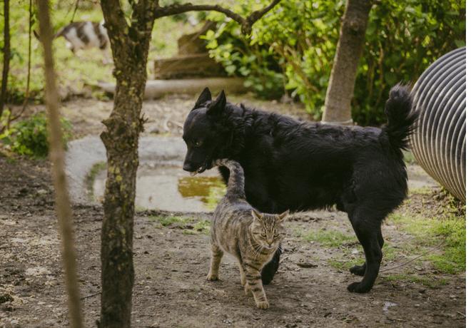 Super Ljilja kolumna 6 pas i maca