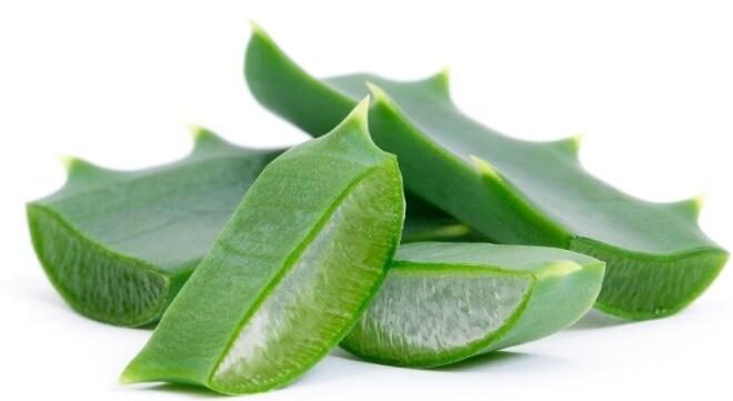 Aloe-vera-kao-lijek