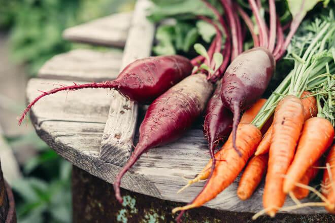 korjenasto povrće