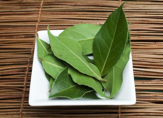 Lovorov list kao lijek