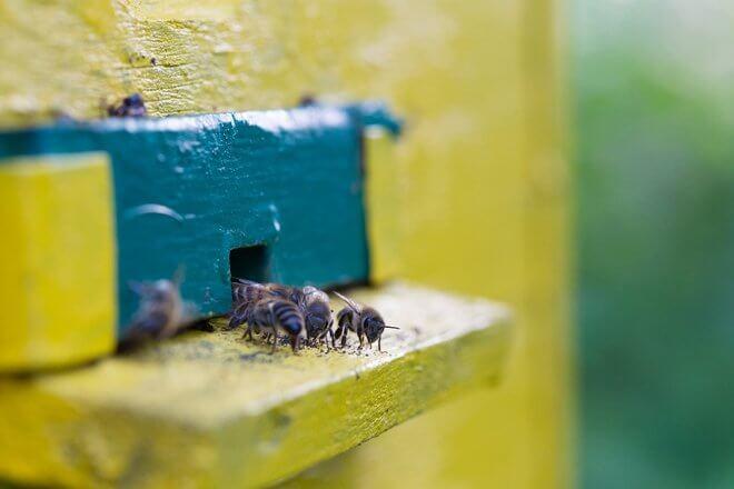 Pčele