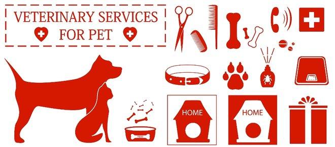 Liječenje psa