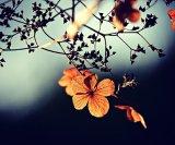 Jesensko cvijeće 2