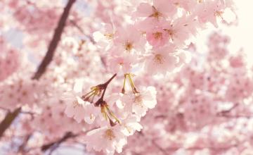 Proljeće i ayurveda