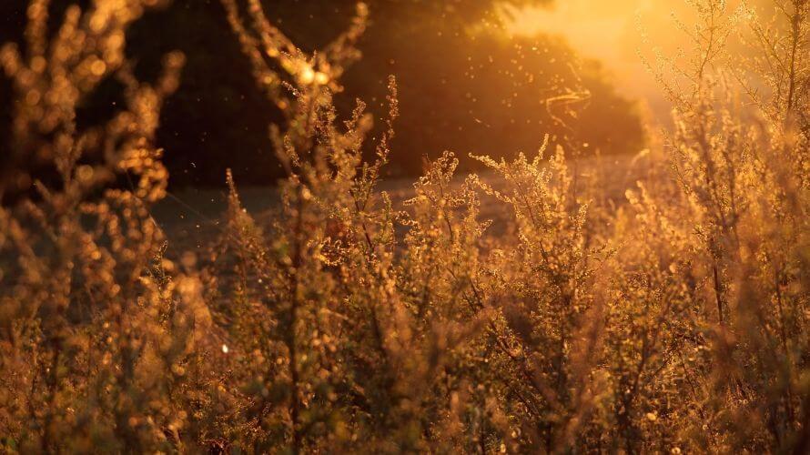 Alergije i želučana kiselina