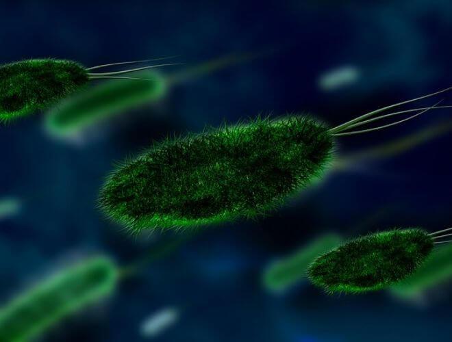 Bakterijska kontaminacija