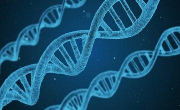 genetska-modifikacija