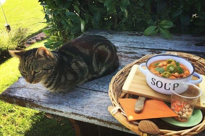 Mačak i varivo od slanutka