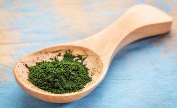 Chlorella alga