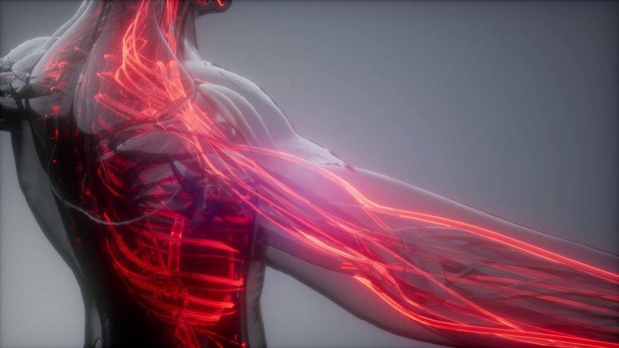 Krvne žile