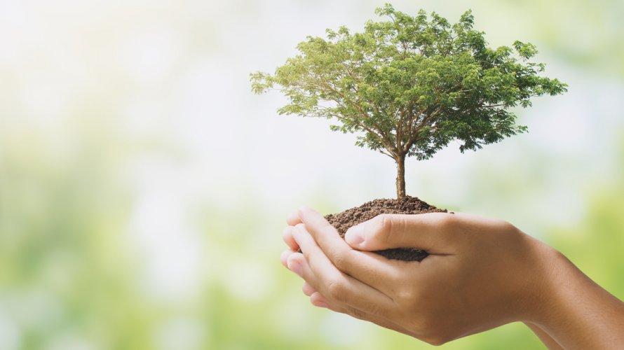 koronavirus utjecaj na okoliš