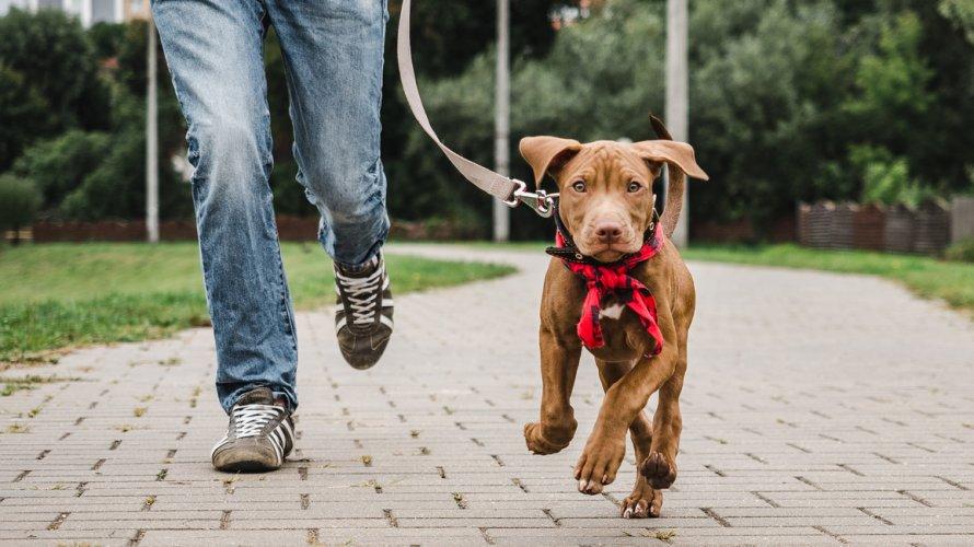 šetanje pasa