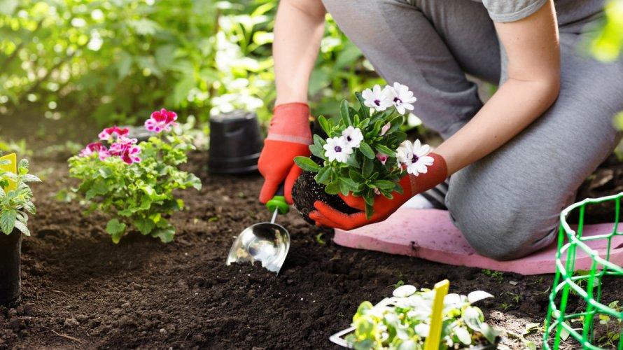 sadnja biljaka